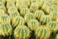 沙生植物區