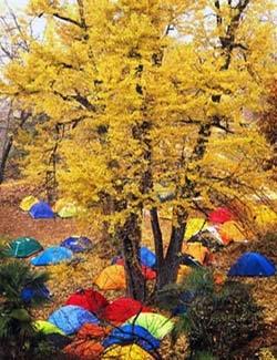 秋冬季节,黄叶飘零,一幅浓抹重彩的金色图画;春天来临,古树新枝,绿叶